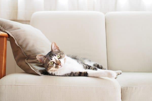 Comment nettoyer du pipi de chat sur un canapé en cuir ?