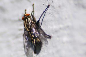 Comment se débarrasser des moucherons au plafond ?